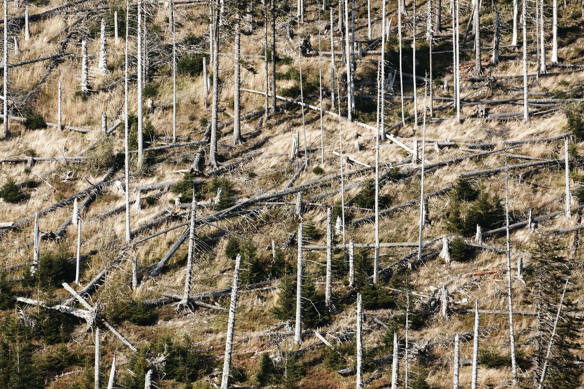 Förderung der Schadensbewältigung im Wald: Programm wird fortgesetzt