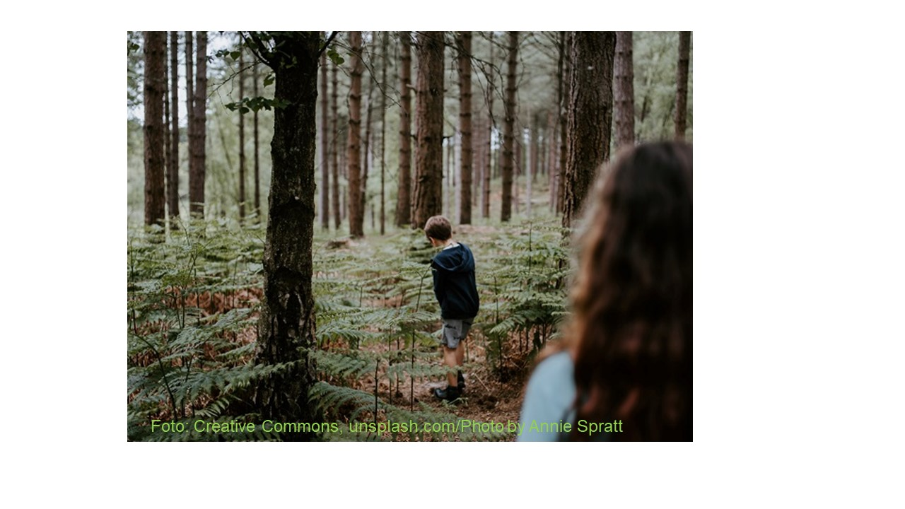 ForestValue: BMEL fördert europäische Forschungskooperation im Bereich Forst und Holz