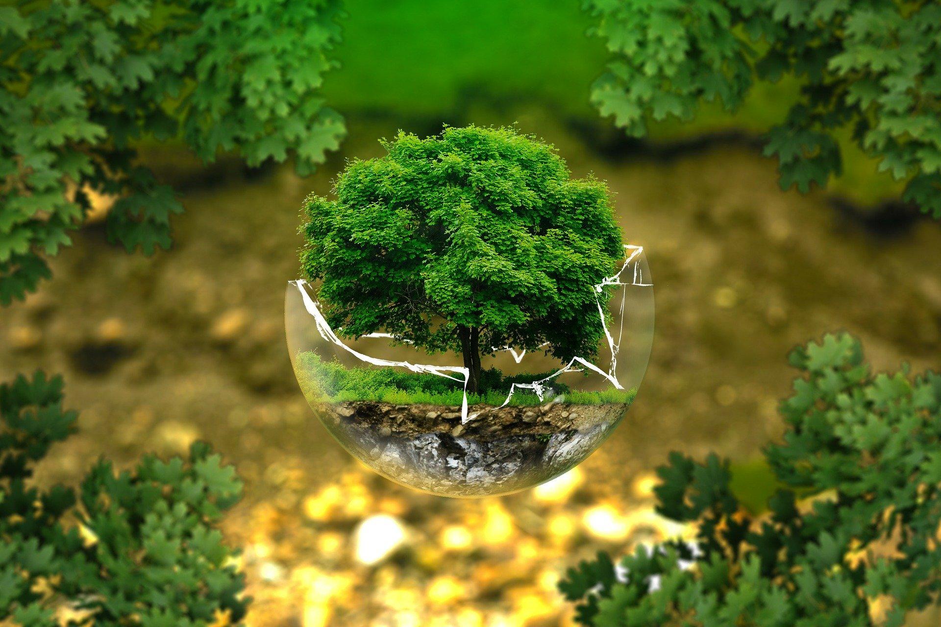 """Fachkonferenz """"Holzbau als Chance für Klimaschutz und Ressourcenschonung"""" am 11.05.21"""
